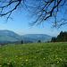 Ziemlich viel Dunst über dem Rheintal