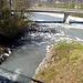 wo die Tamina in den Rhein mündet