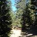 Unten geht es durch schönen, lichten Wald ein Stück Richtung Süden.