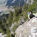 Rückblick: Yuki auf den letzten Metern hinauf zu den Felsen. Gleich kommt eine Querung.