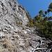 ...dann steht man vor diesem Hang. Rechts Latschen, links Fels, die logische Route führt mittendurch. In der linken Hälfte guter Fels, aber schotterig, I, rechts ist mehr Schotter, dafür hat man Latschenäste zum Anhalten. Hinter den rötlichen Bäumen ganz oben folgt die letzte Rechtsquerung.