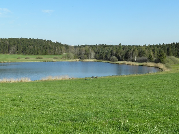 und noch ein attraktives Gewässer-der Sonderhamer Weiher