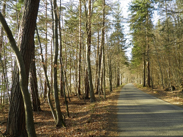 schöne Nachmittagsstimmung am Ostufer des Starnberger Sees