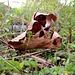 <br />Die spinnen, die Blätter!<br />[https://www.youtube.com/watch?v=h7l3oMx_fv8]