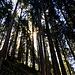 Durch den angenehm kühlen Wald gehts bergab
