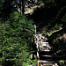 Dann die eben verlorenen Höhenmeter alles wieder im Wald hinauf