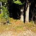 Etwas versteckt der Abzweig in Richtung Bocksberg. Bei den grünen Pfeilen gehts auf den schönen Pfad durch den Wald.