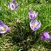 Zarte weiss-violette Farbtöne