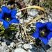 fiori misteriosi