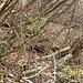 con un poco di pazienza con lo zoom si vede la vipera in cerca di rifugio....è al centro della foto dove c'è una rientranza scura