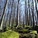 Interessante Felsen im Wald.