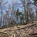 Unterwegs am Zvon - Die Felsen am Gratrücken unweit des Gipfels sind nun immer deutlicher auszumachen.