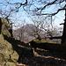 Zvon (Francká hora) - Ausblick am Gratrücken etwas nördlich des Gipfels. Hinten lugt die Milešovka durch das Geäst.