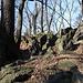 Zvon (vrchol 609 m) - Auch am Nebengipfel gibt es reichlich Fels und natürlich viele Bäume.