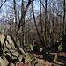"""Zvon (vrchol 609 m) - """"Ausblick"""" am 609 m hohen Nebengipfel. Noch ist die Milešovka halbwegs gut zu erahnen. Später im Jahr dürfte die Aussicht vor allem grün sein."""