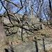 Am Malá Francka - Auch hier gibt es wieder schönen Fels und viel Holz.