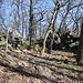 Am Malá Francka - Noch tragen die Bäume keine Blätter, und viel Licht dringt zu den Felsen im Gipfelbereich durch.
