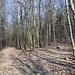 Unterwegs am Kostomlatský vrch - Gerade haben wir den Wanderweg Černčice - Kostomlaty verlassen. Hier halten wir uns rechts. Der angedeutete Weg verliert sich aber auch gleich...