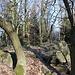 Kostomlatský vrch - Am Gipfel. Selbstverständlich gibt es wieder Bäume und Fels.
