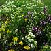 Zu sehen gab es vor allem viele Wildblumen :-)