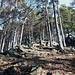 Salita ripida e costante lungo la dorsale boscosa