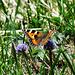 Ein Schmetterling am Wegesrand.
