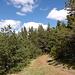 Der Waldweg, auch für untrainierte Wanderer keine Herausforderung.