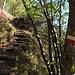 Und weiter gehts, hinauf zum Doss dei Corvi: gut markiert, teilweise über Waldstufen.