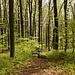 ... und schliesslich den Wald hinunter Richtung Küttigen.