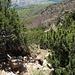Steilabstieg durch Latschengassen - der steile Steig scheint mir für den Abstieg empfehlenswerter als für den Aufstieg.