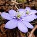 ... und noch ein Frühlingsduo