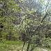 die Bäume werden langsam grün und schon wachsen Kletterseile an den Ästen (muss wohl jemand vergessen haben)