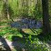 Stimmige Waldpassage bei Rehalp.