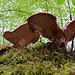 Andere Pilze von unten...