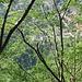 etwas später - Tiefblick durch Bäume