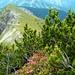 Blick zum Anstiegsweg; der Hügel im Vordergrund ist der Geißsprungkopf