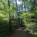 dunkler Bois Neuf