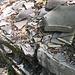 Fossiliensuche am Monte San Giorgio