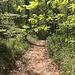 weiter hoch durch den Wald