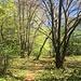 toller lichter Frühlingswald