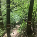 Abstieg zwischen Bäumen