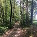 weiter durch den Wald - der Weg wird breiter