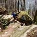 malerischer Waldabschnitt zwischen Stöck und Dörfli