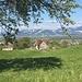 Blick zum Heldsberg