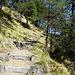 der letzte steile Abstieg hinunter zum Rhein (das Foto täuscht, die Steilheit kommt nicht zur Geltung)