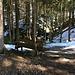 (38) Da dehnt sich die Zeit! Im Mangfallgebirge, Wendelsteingebiet auf dem Anstieg von Birkenstein zur Kesselalm am Sattelbach. BANK 7 von: [u Basthe]