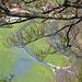 Überschwemmte Wiesen an der Donau