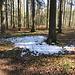 ...und Schneereste im Wald