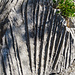 Skurrile Formen im Kalkgestein