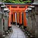 Steinlaternen und Torii am Fushimi Inari-Taisha / 伏見稲荷大社.